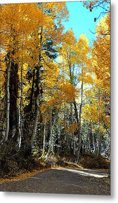 Autumn Magic Metal Print by Lynn Bawden