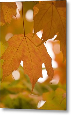 Metal Print featuring the photograph Autumn Maple Leaf  by Lisa Missenda