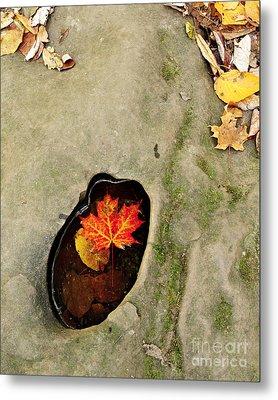 Autumn Maple Leaf Metal Print by Matt Tilghman