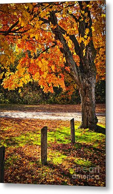 Autumn Maple Tree Near Road Metal Print by Elena Elisseeva