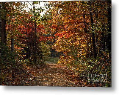 Autumn Nature Trail Metal Print by Cheryl Cencich