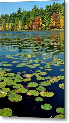 Autumn On The River Metal Print by Rick Frost