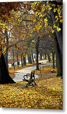 Autumn Park In Toronto Metal Print by Elena Elisseeva