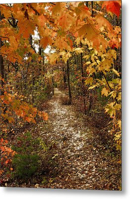 Autumn Path Metal Print by Raymond Earley