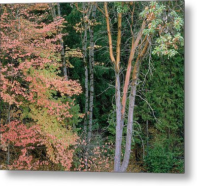 Autumn Scene Metal Print by Mark Greenberg