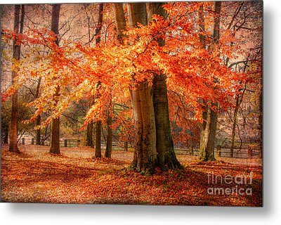 autumn skirt I Metal Print by Hannes Cmarits