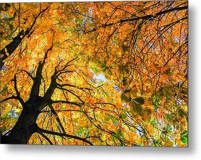 Autumn Sky Metal Print by Hannes Cmarits