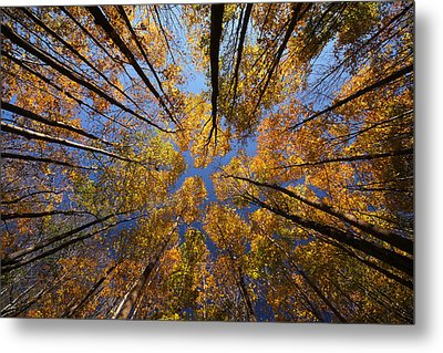 Autumn Sky Metal Print by Mircea Costina Photography