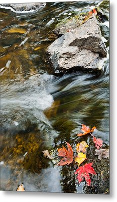 Metal Print featuring the photograph Autumn Stream by Cheryl Baxter