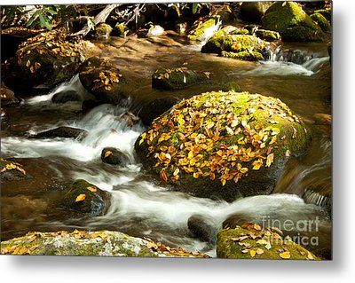 Autumn Stream Metal Print by Lena Auxier