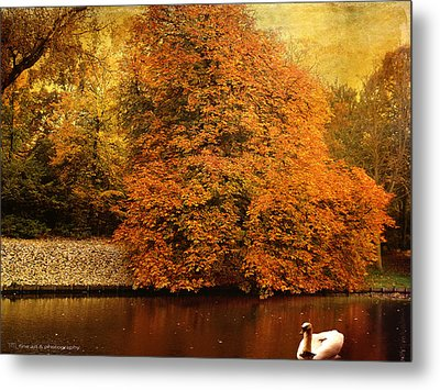 Autumn Swan - Red Leaves Metal Print by Yvon van der Wijk