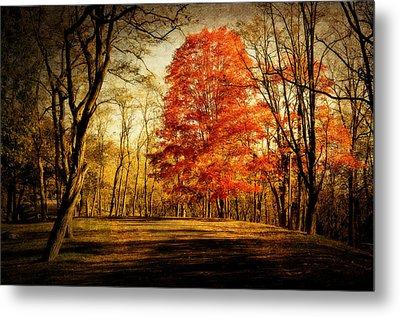 Autumn Trail Metal Print by Kathy Jennings