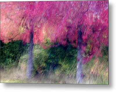 Autumn Trees Metal Print by Carol Leigh