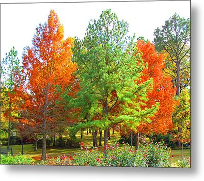 Autumn Trees Metal Print by Evgeniya Sohn Bearden