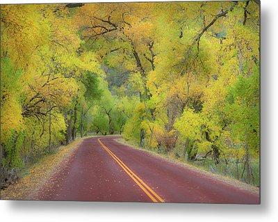 Autumn Trees On Road Metal Print by Royce Bair