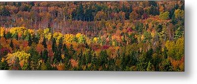 Autumn Trees Panorama Metal Print by Matt Dobson