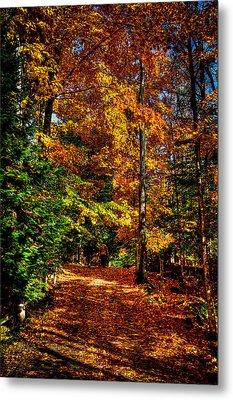 Autumn Walk Metal Print by David Patterson
