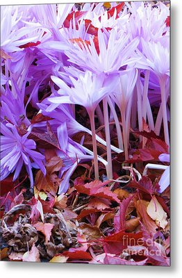 Metal Print featuring the photograph Autumn Water Lily Crocus by Michele Penner