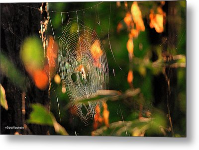 Autumn Web Metal Print by Sarai Rachel