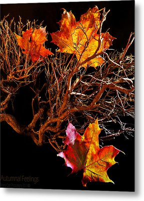 Metal Print featuring the photograph Autumnal Feelings by Beverly Cash