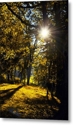 Autumnal Morning Metal Print by Bill Cannon