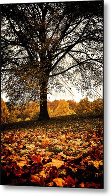 Metal Print featuring the photograph Autumnal Park by Lenny Carter