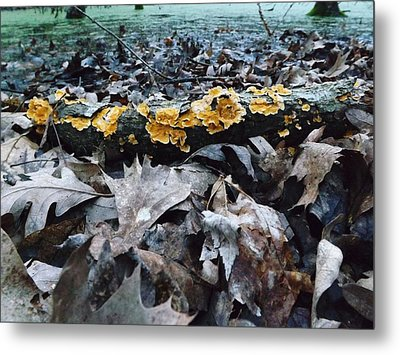 Metal Print featuring the photograph Autumns Art 3 by Gerald Strine