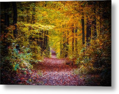 Autumns Canopy Metal Print by Anthony Rego