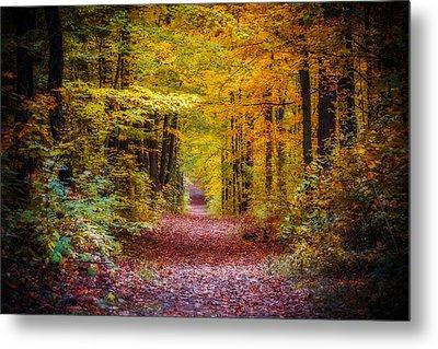 Autumns Canopy Metal Print