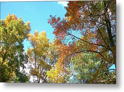 Metal Print featuring the photograph Autumn's Vibrant Image by Pamela Hyde Wilson