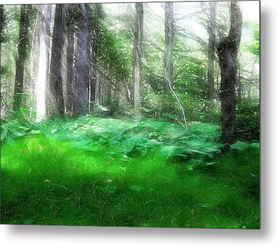 Metal Print featuring the photograph Avalon Forest Dreamscape by Mario Carini