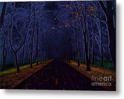 Avenue Of Trees Metal Print by Michal Boubin