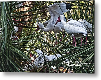 Metal Print featuring the photograph Aviary by Linda Constant