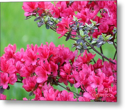 Metal Print featuring the photograph Azalea by Andrea Anderegg