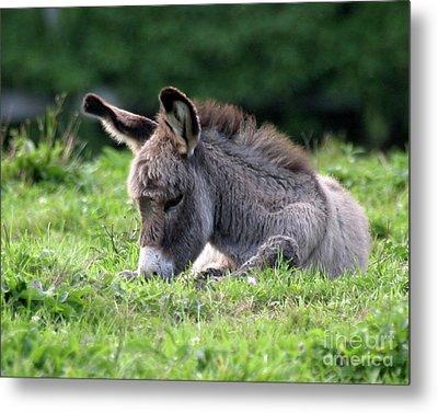 Baby Donkey Metal Print by Deborah  Smith