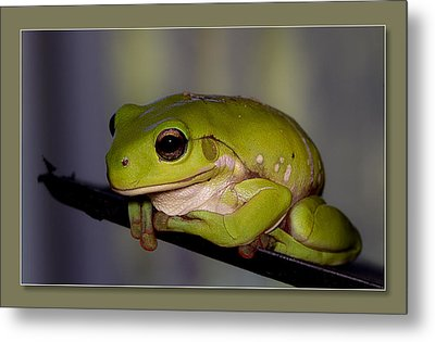 Metal Print featuring the digital art Baby Frog by Kevin Chippindall