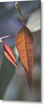 Metal Print featuring the photograph Baby Gum. by Carole Hinding