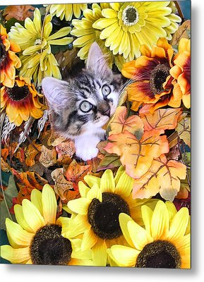 Baby Kitty Cat Munching Fall Leaves - Cute Kitten In Autumn Colors With Sunflowers - Fall Time Metal Print by Chantal PhotoPix