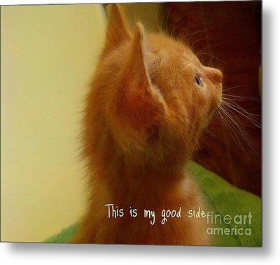 Metal Print featuring the photograph Baby Kitty by Garnett  Jaeger