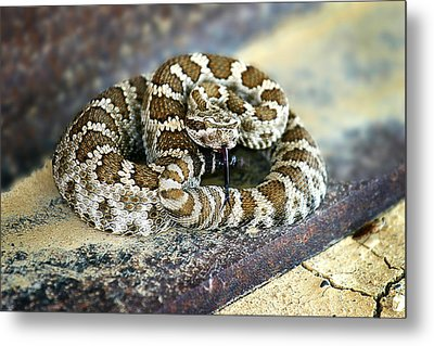 Baby Rattle Metal Print by Anthony Jones