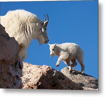 Metal Print featuring the photograph Baby Steps by Jim Garrison