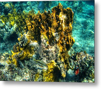 Bahamas 049 Metal Print by Lance Vaughn