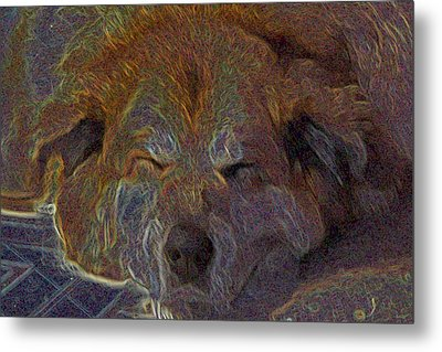 Baily May Metal Print by One Rude Dawg Orcutt