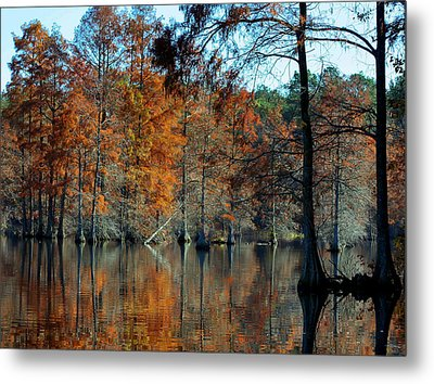 Bald Cypress In Autumn Metal Print