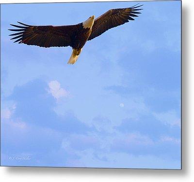 Bald Eagle - The Grand Master 2 Metal Print