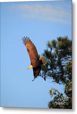 Bald Eagle Liftoff Metal Print