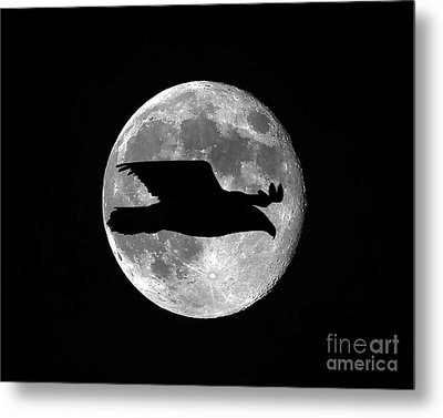 Bald Eagle Moon Metal Print by Al Powell Photography USA