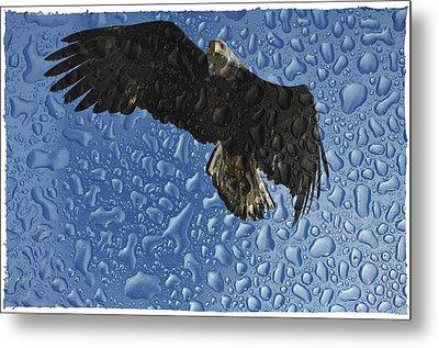 Bald Eagle Rain Metal Print by Debra  Miller