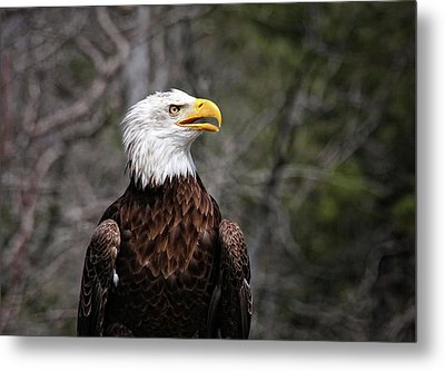 Bald Eagle Metal Print by Sandra Anderson