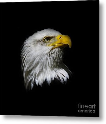 Metal Print featuring the photograph Bald Eagle by Steve McKinzie